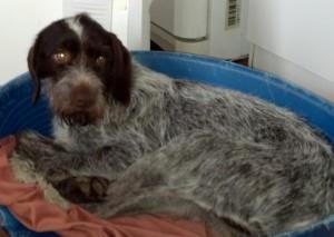 Hector, le chien de Chateau VERETZ