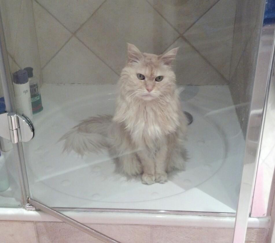 Le Chat dans la douche