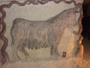 donkey in cave