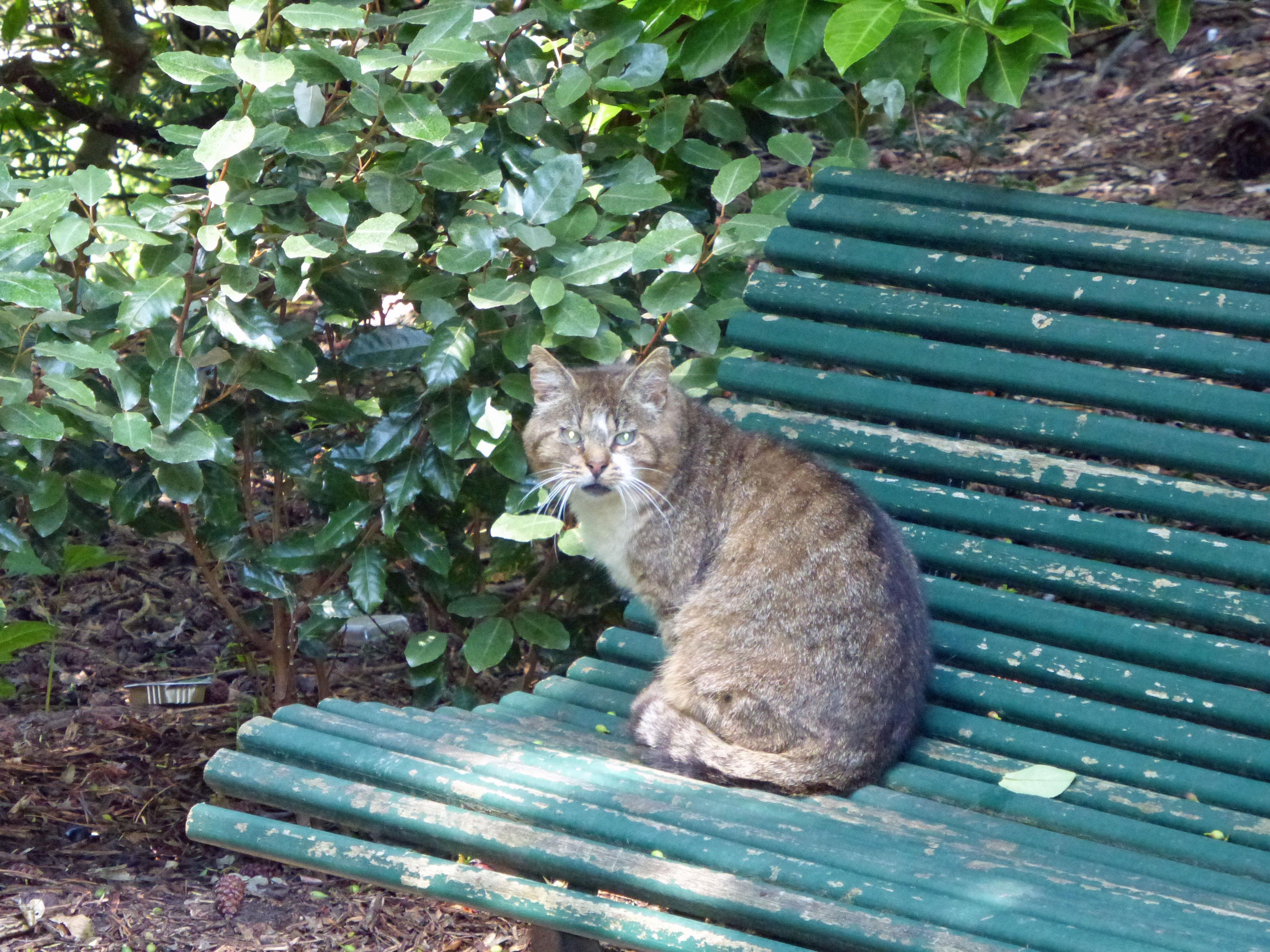 parc cat