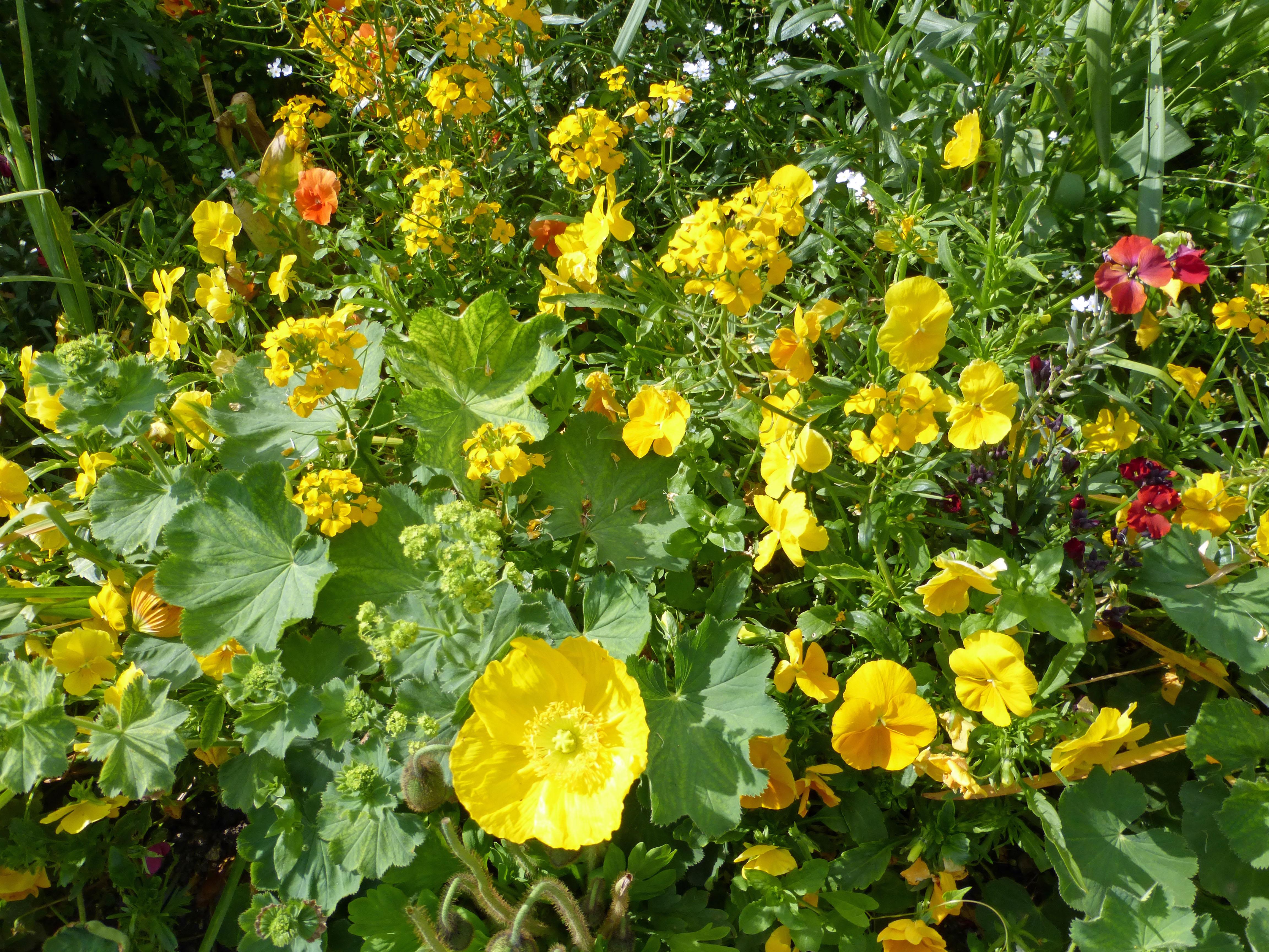 yellow garden